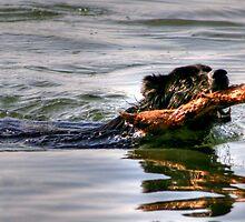 Go Fetch!! by Larry Trupp