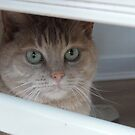 Cat in a Box by neon-gobi