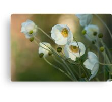 In the footsteps of angels - Windflower Canvas Print