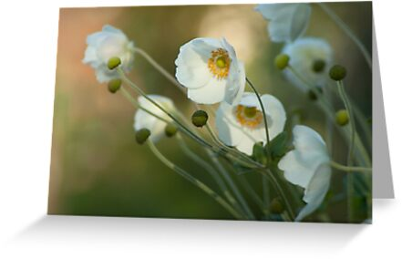 In the footsteps of angels - Windflower by steppeland