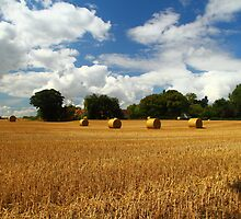 Rural Delight by Paul Bettison
