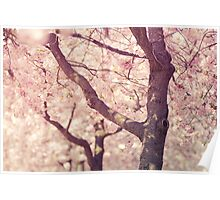 Spring is here Poster