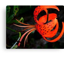 Lily !! Canvas Print