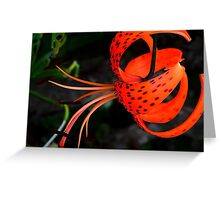 Lily !! Greeting Card