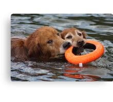 Sharing The Water Toy? Canvas Print