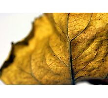Leaf Detail Photographic Print