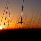 Sunset Behind the Dunes by Kevin Stauss