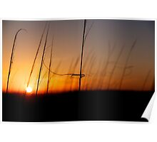 Sunset Behind the Dunes Poster