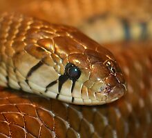 Brown Snake by Gregory L. Nance