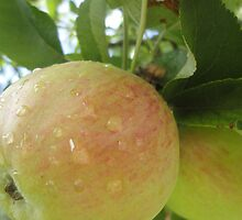 ripe for the picking by tina stockham