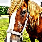 HDR Horse by Jessica Liatys
