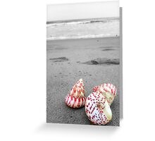 Colourful shells on an empty beach Greeting Card