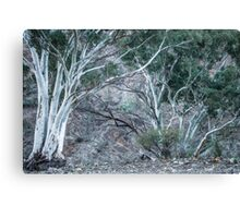 Red Gums in the Creek Canvas Print