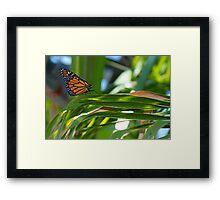 Butterfly Trail by Liane Pinel Framed Print