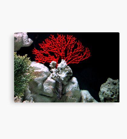 Lion Fish Flower Canvas Print