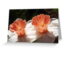 Pink Daffodils - Drouin Greeting Card
