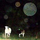 Some Folks Think That These Orbs Are Not There by PaulCoover