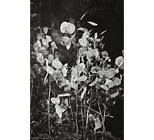 Kodama Photographic Print