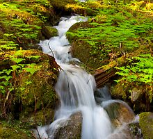 Waterfall-Tongass National Forest by Gleb Zverinskiy