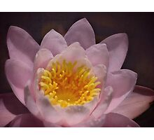 Pink waterlily fantasy Photographic Print