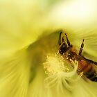 Bee Study 1 by KatsEyePhoto