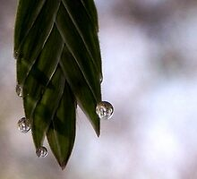 Dew drops on  Seeds by bannercgtl10