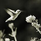 Hummingbird 4 in B&amp;W by KatsEyePhoto