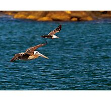 Wing Man Photographic Print