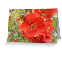 Red Blossom Greeting Card