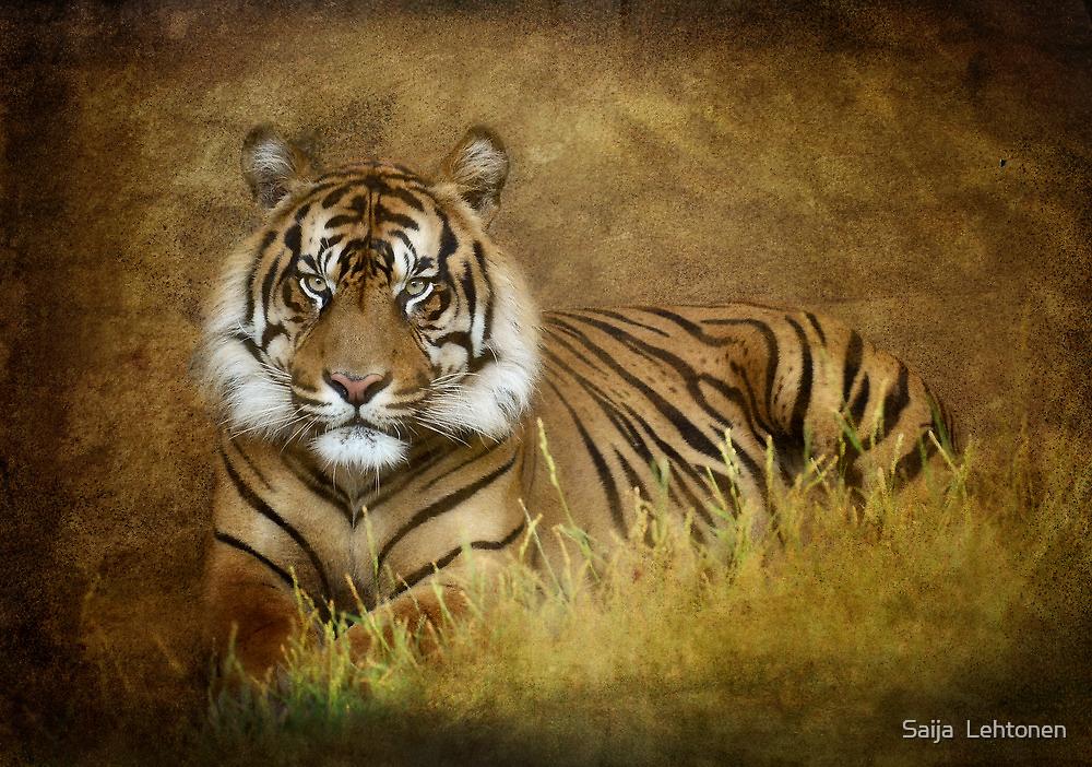 Tiger's Tale by Saija  Lehtonen