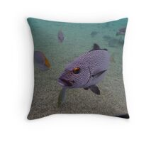 'Are you looking at me?' Throw Pillow