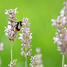 The Lavender and The Bee by sionii