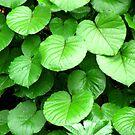 Wet leaves after a rain by Shiju Sugunan