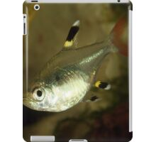 Tiny X-Ray Tetra