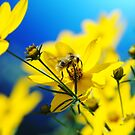 Bee On The Yellow by Jonice