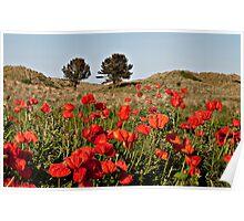 Bamburgh Poppies Poster