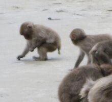 Baby Monkey- Monkey Island on Kyushu  by Sunny Shaffner