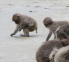 Baby Monkey- Monkey Island on Kyushu  by Sunny Shaffner