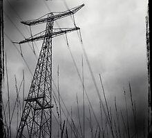 No bird on a wire. by angelmontana