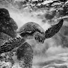 Hawaiian Green Sea Turtle BW by Flux Photography