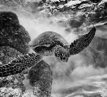 Hawaiian Green Sea Turtle BW by Flux Photography