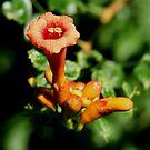 One Trumpet Flower by Karen K Smith