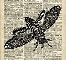 Moth Insect,Fly over Dictionary Page by DictionaryArt