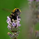 Busy Bee by sionii