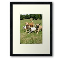 The Pack having fun Framed Print
