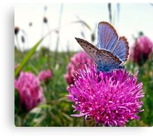Butterfly & Clover Canvas Print