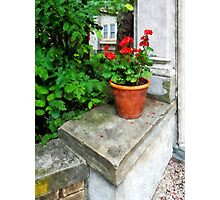 Pot of Geraniums on Stoop Photographic Print