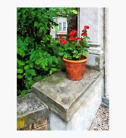 Pot of Geraniums on Stoop Photographic Print