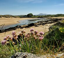 Thrift above the river Culdaff by Conor Donaghy