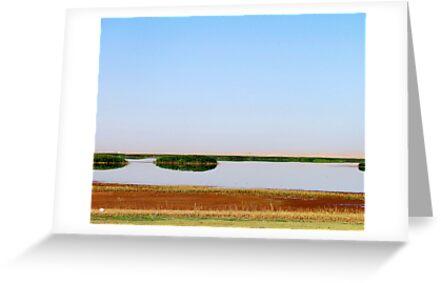 The Lake Bushes by Omar Dakhane